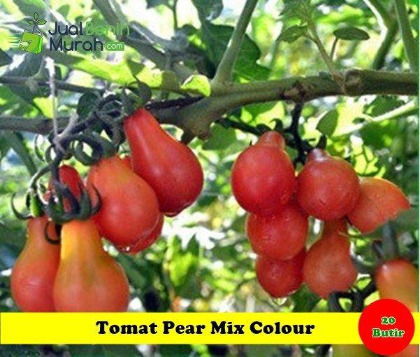 Benih Tomat Pear Mix Colour Benih Sayuran Tomat Unggul Dengan Bentuk Buah Unik Seperti Buah Pear Dan Memiliki Rasa Yang Mani Benih Tanaman Tomat Ide Berkebun