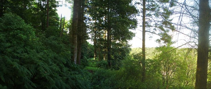 Glendue Wood, Northumberland, England
