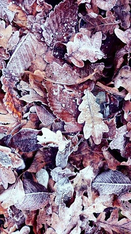 Pocsikphoto fallen leaves