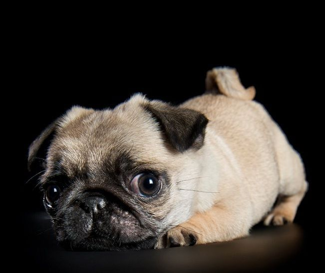 """Click visit site and Check out Cool """"Pug"""" T-shirts. This website is superb. Tip: You can search """"your name"""" or """"your favorite shirts"""" at search bar on the top."""