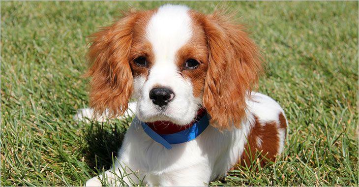 Purr N Pooch Pet Resort Tinton Falls Nj 34 38 Night Comfortable Suites W Tv Et Hopper991810 3438night Comfortable In 2020 Pet Resort Work With Animals Pets