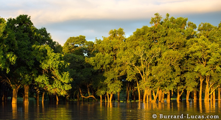 Rivers and Rainbows....an ebony grove off the Luangwa River