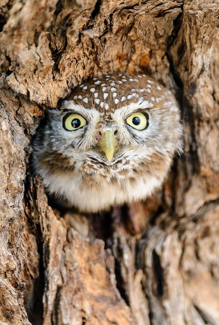 This is the type of owl that scares other owls. Like...hey, baby owl, want some insects from my sketchy burrow?