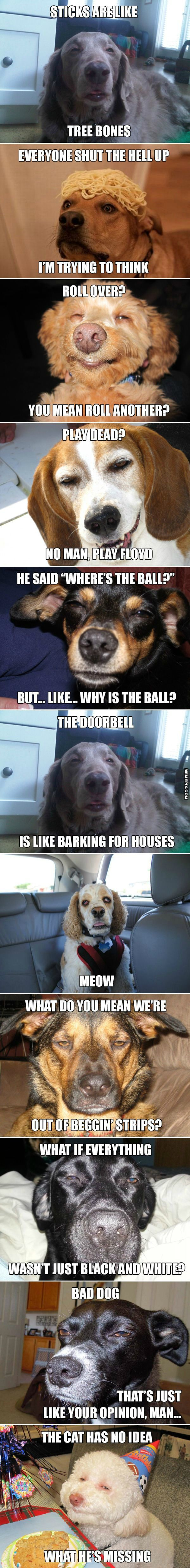 Stoner dogs. bahaha. I sometimes Darla must  have a hash dealer or something...