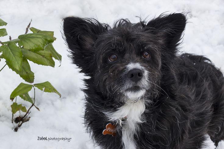 kutyafotózás kutyafotós #kutyafotos #kutyafotózás dog photography budapest #dogphotography #dogphotographybudapest #kutyafoto #kutyafotó #kutyaportré #zséelphotography