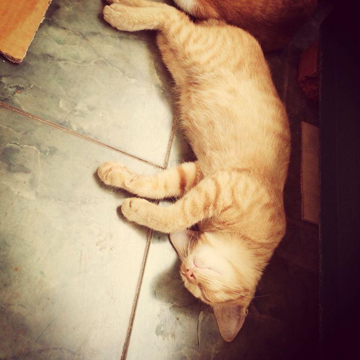 Sleeping position 5