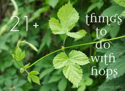 Things to do with hops