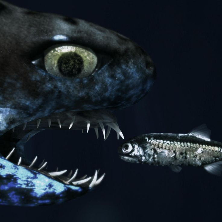 """The bioluminescent lanternshark has spines that light up to warn predators, and uses light to make itself almost completely invisible, while the viper shark uses light to attract prey. From Shark Week 2015's """"Alien Sharks: Close Encounters."""""""