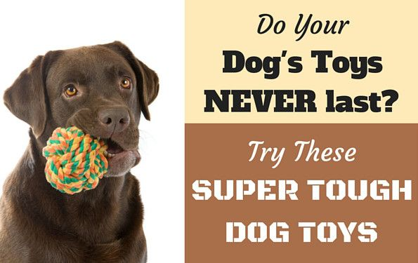 If your destroys their toys in minutes, take a look at these 10 best nearly indestructible and durable dog chews and toys for hard, aggressive chewers.