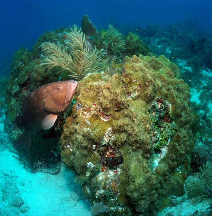 NOAA: Tortugas marine reserve yields more, larger fish