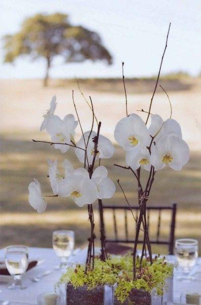 Google Image Result for http://francoiseweeks.com/wordpress/wp-content/uploads/2009/07/centerpiecewhite-orchids-francoise-weeks1.jpg