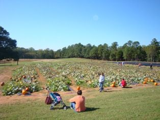 Pumpkin Patches, Corn Mazes, Hayrides and More!  Find a pumpkin patch, corn maze, hay ride and more near you!