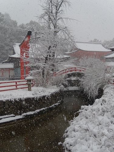 A 'wabi-sabi' #winter scene Shimogamo Shrine #Kyoto, #Japan