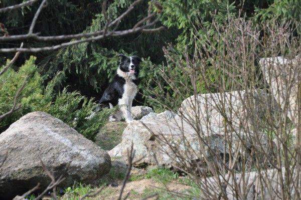 Maidanezii din Grădina Botanică vor dispărea/ Ecosal va captura patrupedele săptămâna viitoare