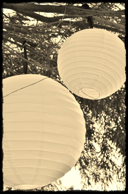 Paper Lantern hanging from a tree used as decor