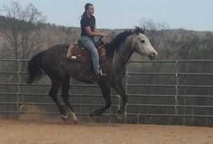 See 'Edisto' if you've been looking for a versatile, well-trained Quarter Horse!
