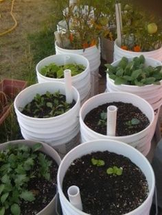 Container gardening using DIY self-watering pots http://www.urbangrangeliving.com/
