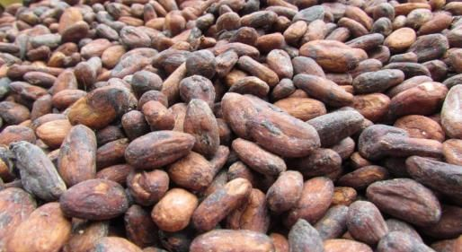 Fairtrade kakao