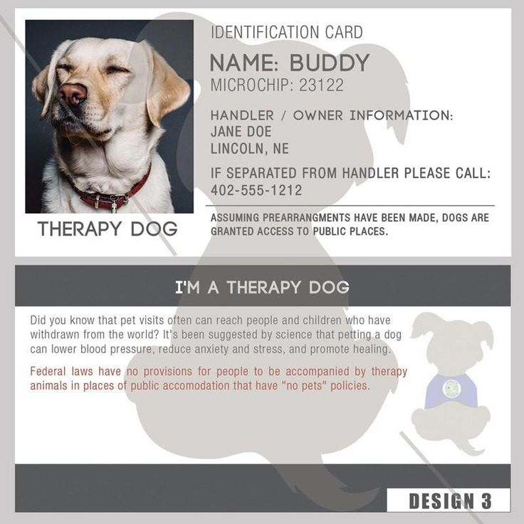Id card therapy dog service dogs medication for dogs