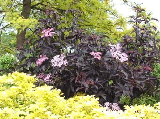 17 best images about someday garden on pinterest gardens. Black Bedroom Furniture Sets. Home Design Ideas