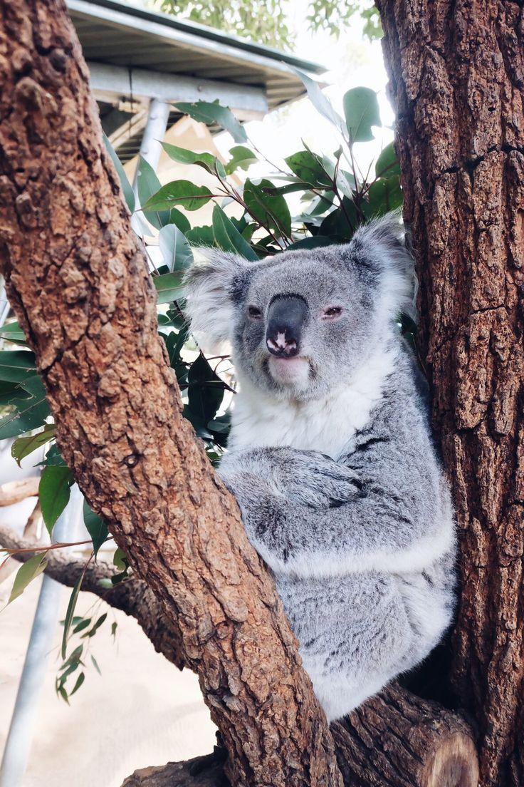 : Taronga Zoo, Sydney, AUS Sydney trip 2016