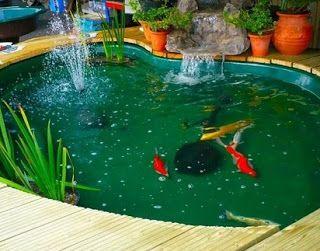 cara membuat filter kolam ikan koi,desain kolam koi