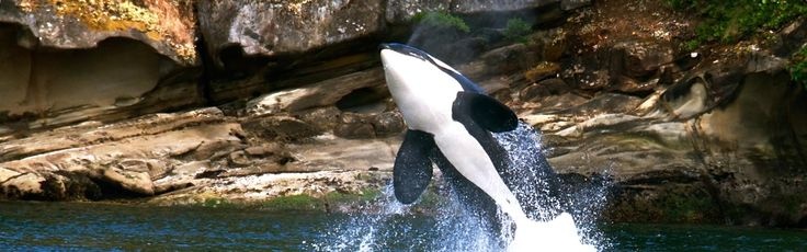 https://www.visitsanjuans.com/what-to-do/orcas-island/whale-watching