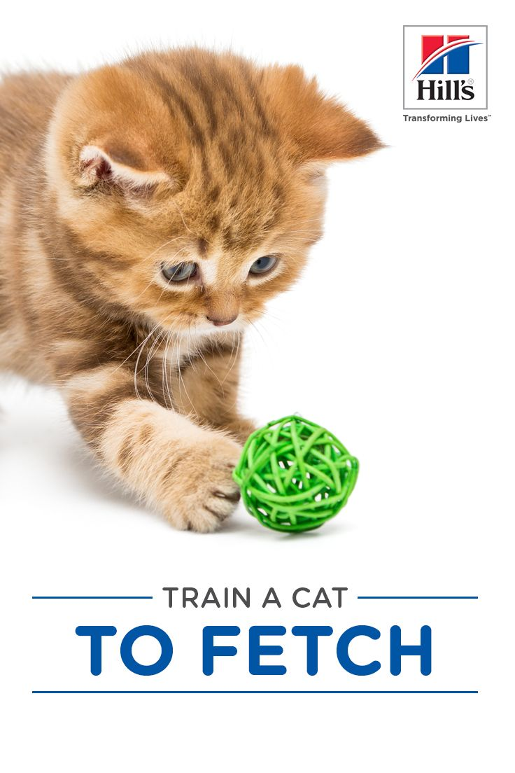 How To Teach A Cat To Fetch Hill S Pet Cat Training Cat Care Cats