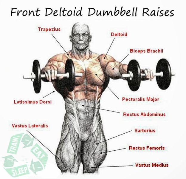 1000+ images about Front delts training on Pinterest | Shoulder ...