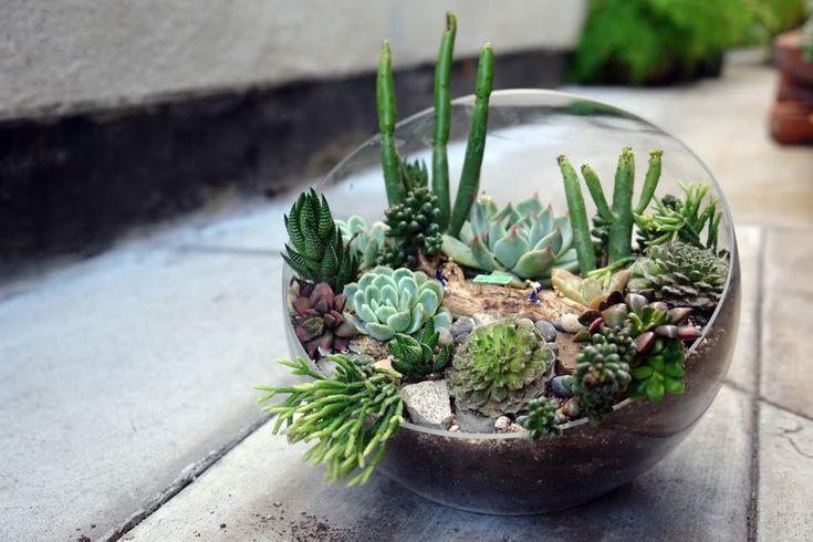 Custom terrarium by Terri Planty