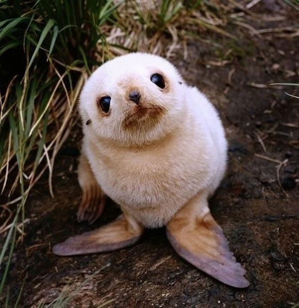 Hello - aren't I adorable? Baby Seal you just want to hug him and squeeze him and call him George. Photo credit: imgur