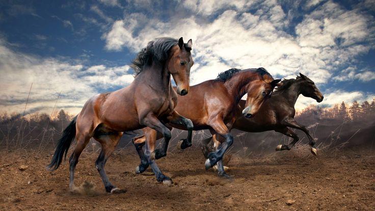 Hayvanlar Atlar Üç Bulut Çalışmaları Komik Vahşi Hayvanlar