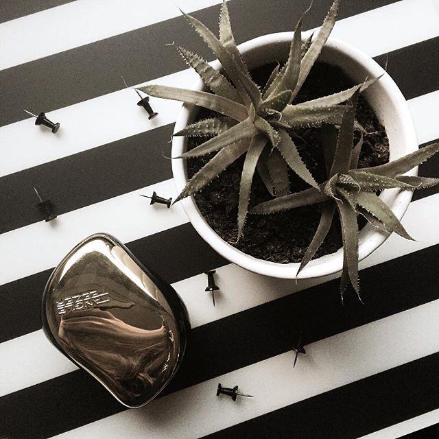 "Zapraszam do @kraudynkashop 😄😄😄 na kod ""maarisaay"" 5% rabatu 👌🏼 możecie kupić tam m.in. szczotki Tangle Teezer, ubrania, kosmetyki 👗💅🏻💋👑👗💅🏻💋👑👗💅🏻💋👑👗💅🏻💋👑👗 #rabat #hairbrush #tangleteezer #cactus #plant #tacks #strips #tumblrphoto #tumblrpost #tumblrinstagram #przegladinstagram #fajnyprogram"