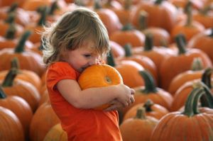 Fall Festivals for Your Motorhome Rental Weekend http://ow.ly/dR6a9: Weekend Http Ow Ly Dr6A9, Fall Festivals, Motorhome Rental, Travel Ideas, Rentzio Fan, Rental Weekend