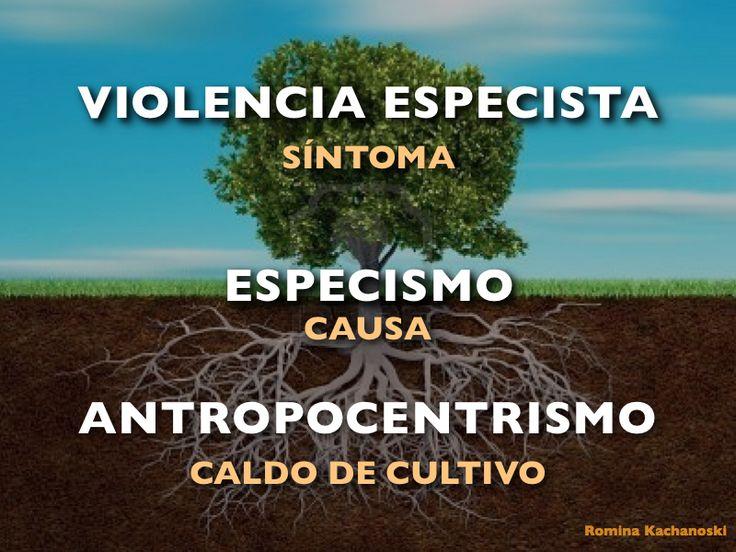 Romina Kachanoski es psicóloga social especialista en intervención socialinfanto-juvenil y familiar, y en investigaciones sobre violenci...