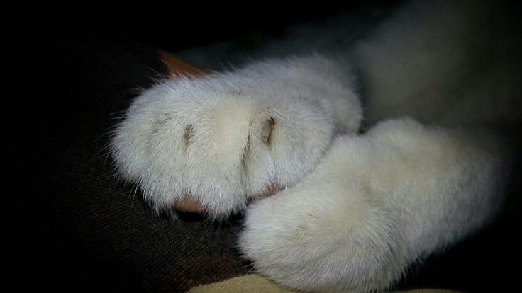 Kitty soft paws #cat #pet