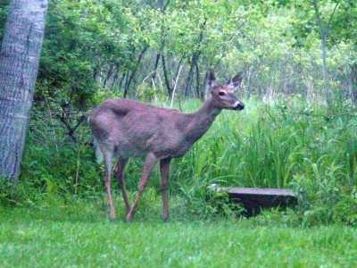 Site for deer resistant plants.  My experience is - there is no such thing as a deer resistant plant!