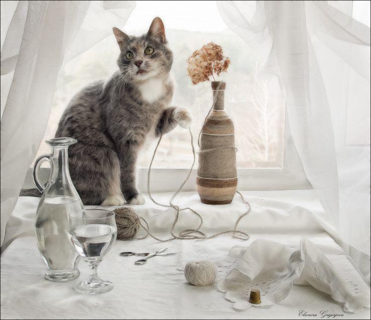 35PHOTO - Eleonora Grigorjeva - Кошки на окошке