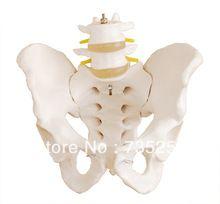 Life-Size Pelvis With 2pcs Lumbar Vertebrae,Natural Big Pelvic Model of the Lumbar Spine //Price: $US $36.58 & FREE Shipping //