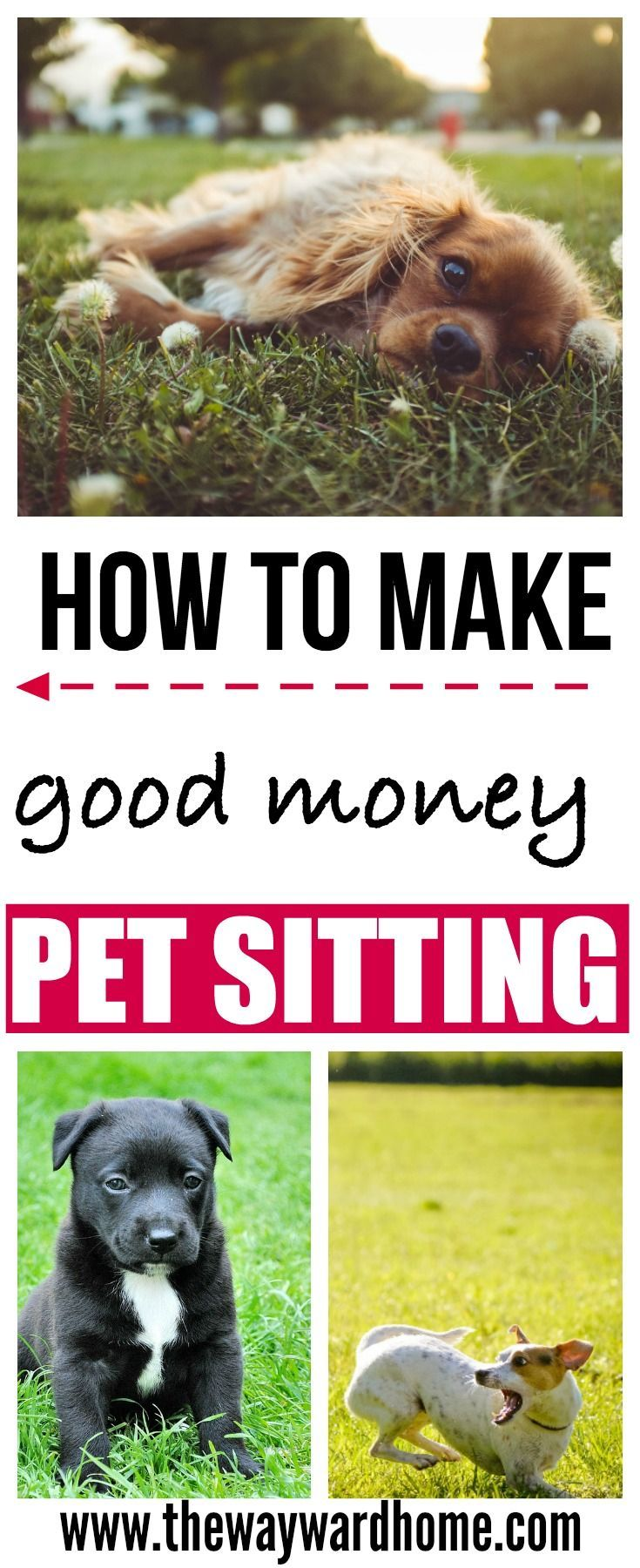 How To Get Pet Sitting Jobs And Make Over 1 000 Per Month Pet