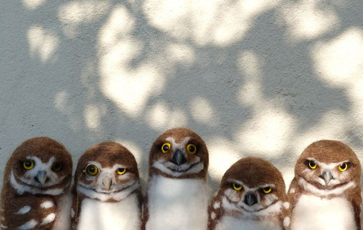 Pip's poppies: Burrowing Owl Youth Gang :-)