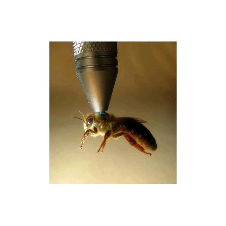 Stylo magnétique Apinaut pour reine abeille - Luberon Apiculture