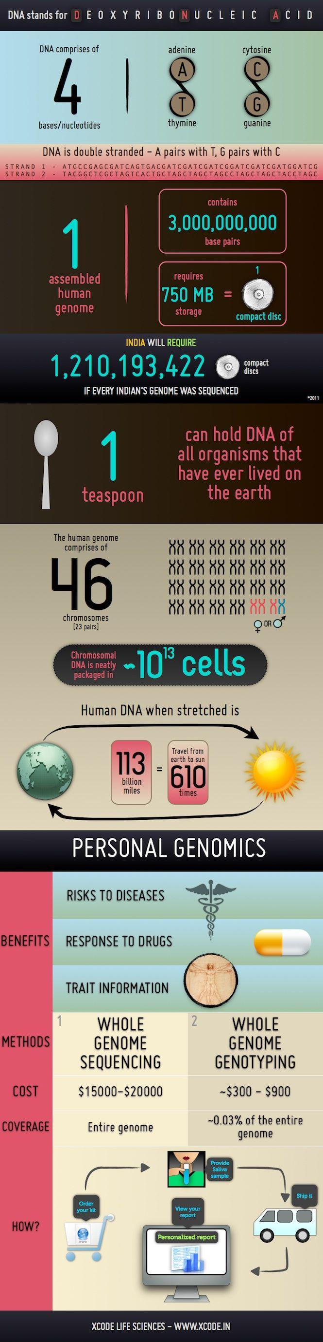 DNA Indepth