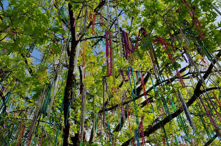 beads in trees during Mardi Gras