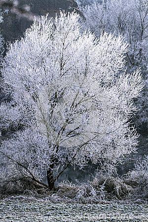 Winter landscape, tree on snow.