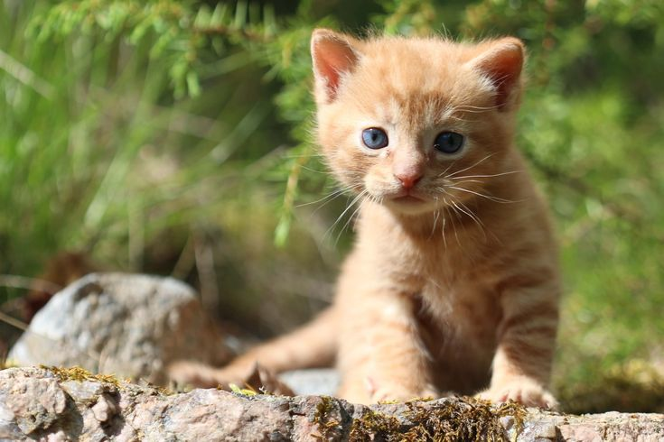 Bringing Home a Kitten: So you want to adopt a kitten, eh? While the urge to bring home a… #Cat_Care #adoption #care #health #kittens