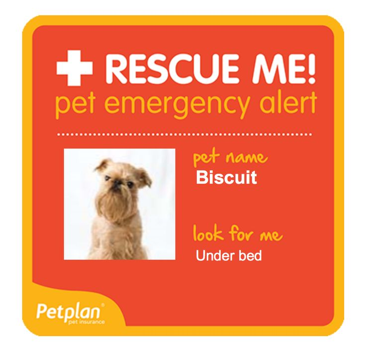 FREE Pet Rescue Alert from Petplan Pet Insurance. Create yours today here!