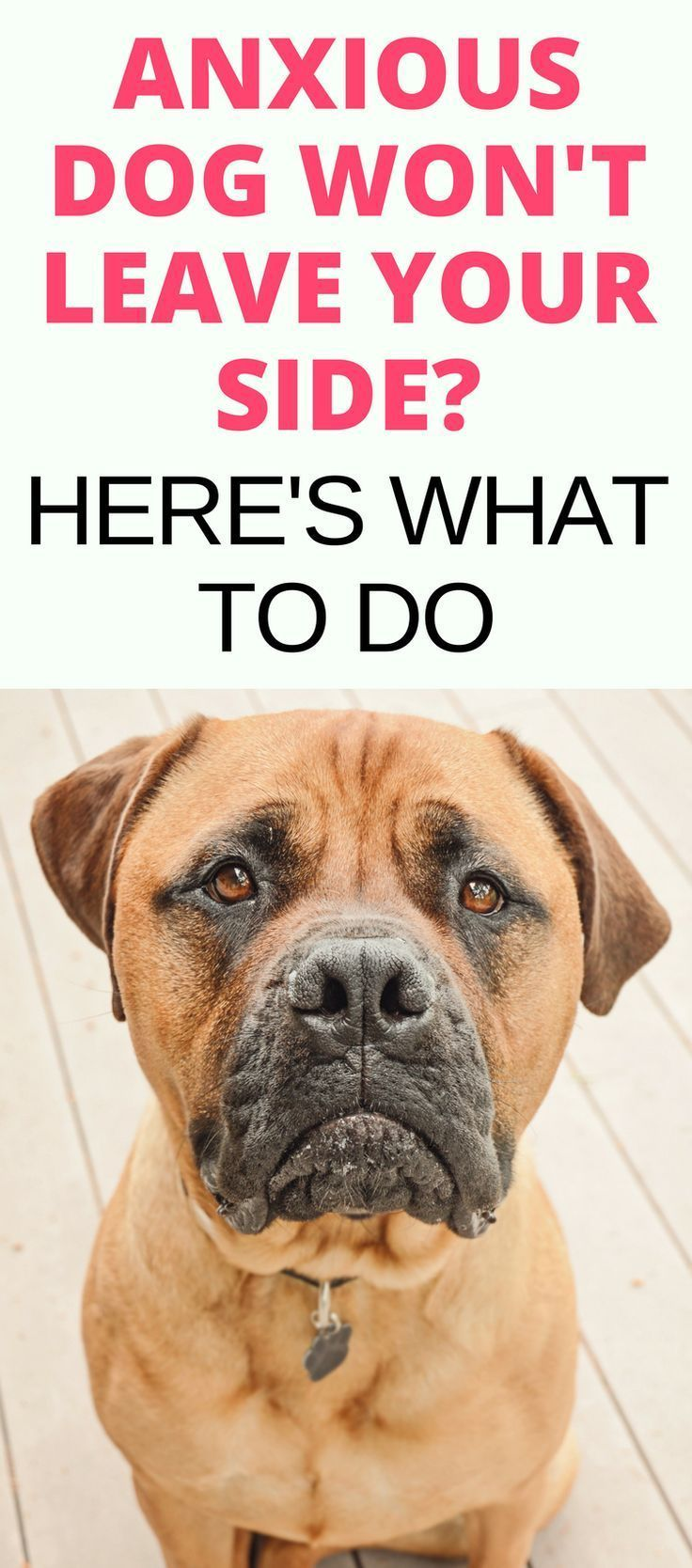 Does your dog suffer from anxiety? Separation anxiety in dogs and fear aggression in dogs can be common. Read this guide to Anxiety In Dogs to find out what it is along with these dog anxiety remedies and tips to help calm your pet.