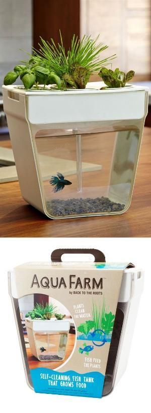 AquaFarm // self-cleaning and self-feeding fish tank! #product_design by sarleeann