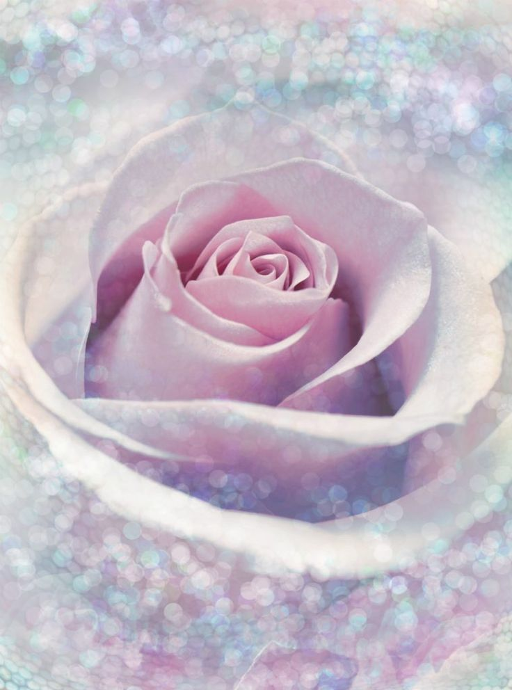 Fototapet Trandafir Delicat - Vlies :https://aa-design-interior.ro/magazin/fototapet-trandafir-delicat-vlies/